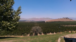 The view from our etrog farm - Copy